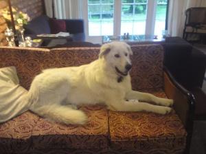 Jasper couch 22.11.11