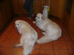 Me and Nellie in the kitchen, supervising activities