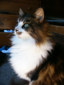 One of the maine coons. She is called Kitten. Not  a very imaginative name.