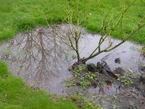 Mummy's rose garden under water