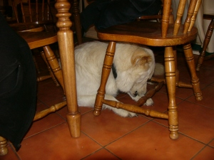 Me hiding under the kitchen table.  Do you think anyone would notice Me?