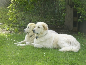 Me and Nellie supervising mummy out in the garden.