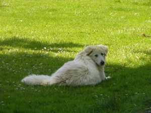 Nellie, sitting on our play lawn.