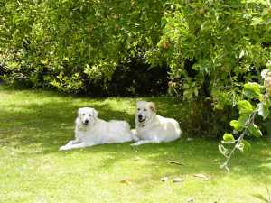 Me and Nellie down under the apple tree