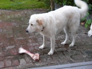 Me with my bone.