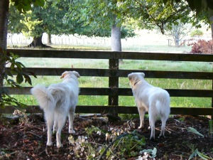 See our gleaming wavey white tails.