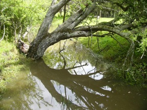 The creek between the house and the woolshed.