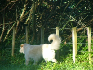 Me at the fence, telling mummy where Nellie is.