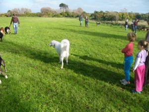 No, that is not Me or Nellie.  It is another maremma called Sophie.