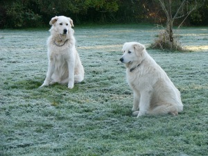 Me and Nellie on a frosty lawn.