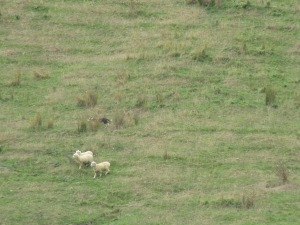 If, you look very carefully, you can see the sheep and the dog.