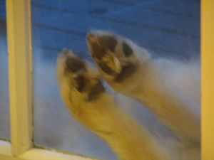 Guess whoses dainty feet these are?