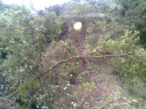 A tree down at Reid's Hill