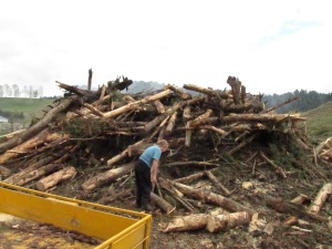 Mummy and the large pile of wood.