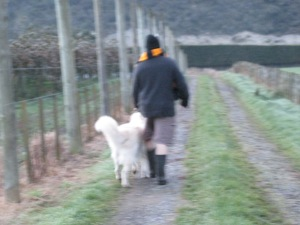 Rushing down to the orchard to retrieve the wayward Nellie.