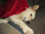 See Me under a nice warm blanket.