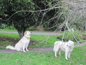 Me and Nellie looking at something in the old apple tree.