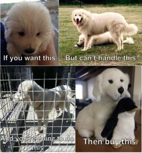 cant handle a maremma