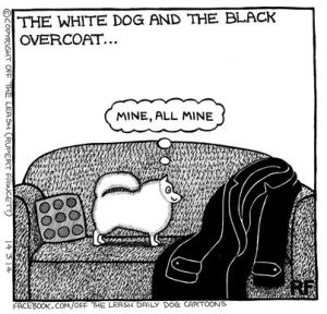 white dog and black overcoat