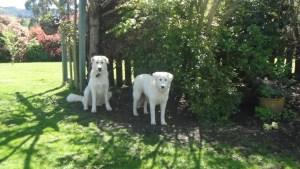 Jasper and Nellie