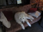 No, that is not Itai on the couch.  It must be imaging it!